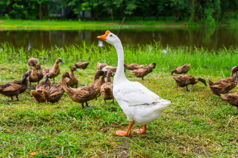 A Duck called Goose is still a Duck – the meaning of